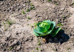 Les aliments que nous mangeons accentuent le changement climatique !