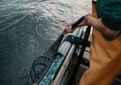 Ondas de calor marinhas poderão afetar a captura de peixe
