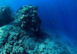 Os vulcões subaquáticos são casa para mais espécies do que pensamos