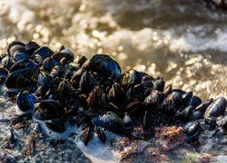 Ouest américain et canadien : la canicule a tué la faune marine !