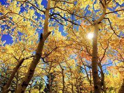 Outono de 2019: o que esperar para este ano?