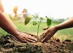 Climat : limiter la sécheresse en Europe grâce aux arbres !