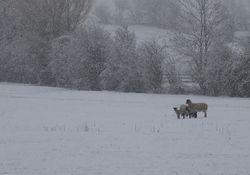Polarpeitsche bringt nächste Woche Winterchaos nach Deutschland!