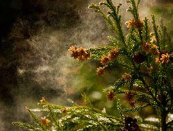 Pólenes y Meteorología, la conquista del aire