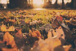 Predicciones para otoño: más cálido de lo habitual