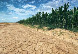 Primeras tendencias climáticas para la primavera 2021