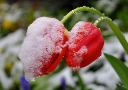 Schon wieder Nachtfrost: Gibt´s nochmal Schnee oder wird´s nun warm?
