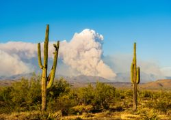 Rare pyrocumulonimbus clouds spotted above United States wildfires