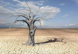 Schock: Tropische Regionen durch globale Erwärmung bald unbewohnbar!
