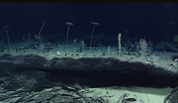 Récords de mercurio en el fondo del Pacífico