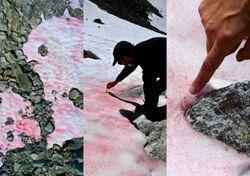 Sangue glacial: Descobertas alarmantes sobre a neve vermelha