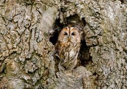 State of the UK's woods and trees revealed