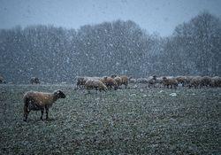 Steht der erste Wintereinbruch bis in tiefe Lagen vor der Tür?