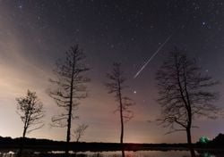 Summer meteor showers: the Delta Aquariids and Perseids
