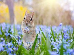 Temperaturen über 20 Grad: Hoch Hannelore bringt den Frühling!
