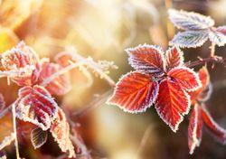 Tempo no fim de semana: continua seco e o frio começa a ganhar terreno
