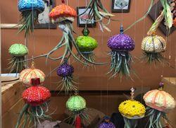Tillandsias: las medusas del aire