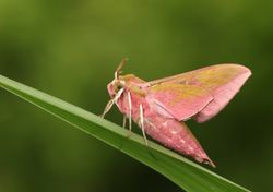 UK lockdowns led to an increase in rare moth sightings