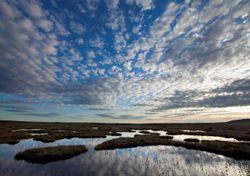 UK nature restoration plans revealed