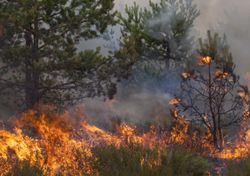 UK's dry weather sparks series of wildfires