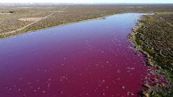 Una laguna argentina se vuelve rosa