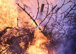 Il vento alimenta ancora il vasto incendio vicino Pisa