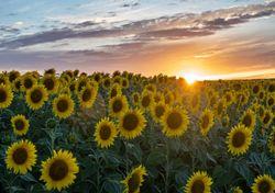 Vuelven los 40 ºC el fin de semana: ¿dónde y hasta cuándo?