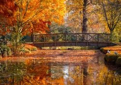 When is the best time to see Autumn leaves in the UK?
