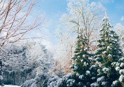 Wird der Dezember 2018 eisig und schneereich?
