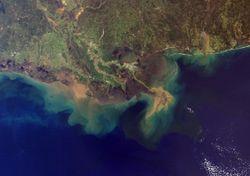 Se ahoga el océano: ¿qué es la zona muerta del Golfo de México?