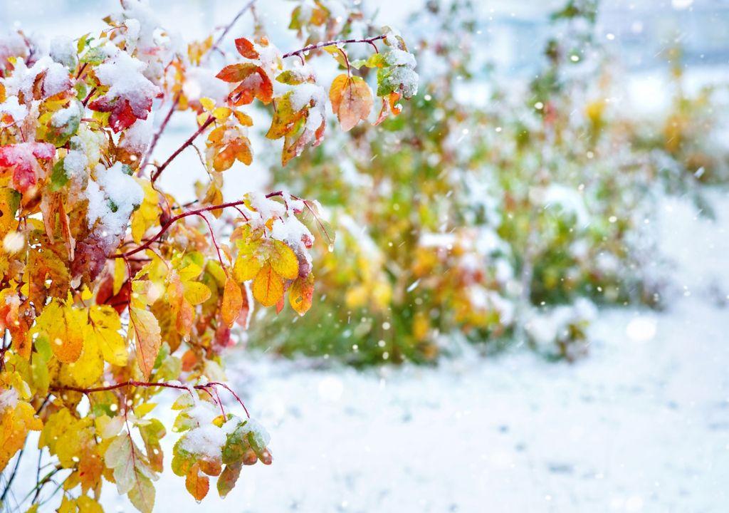 Prognose November