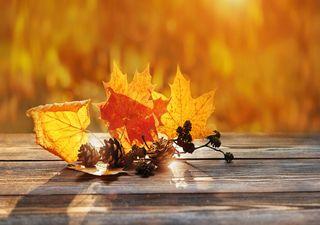 Welches Wetter bringt der Oktober? Die Monatsprognose!