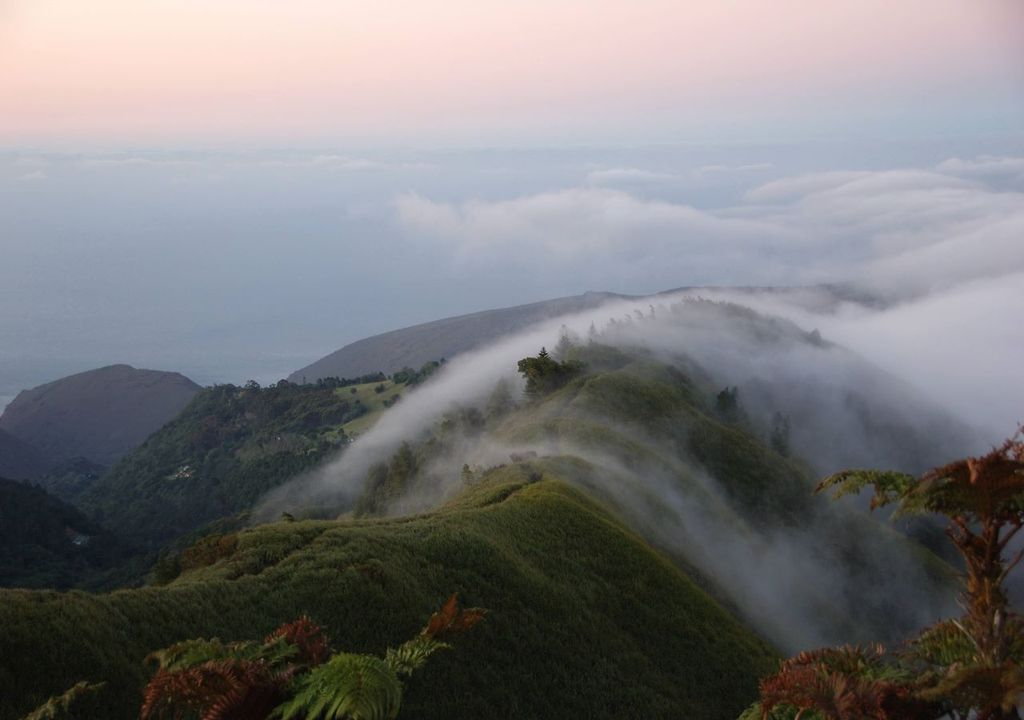 Mists in cloud forests provide crucial water supplies