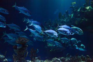 Desplazamientos de las especies marinas en océanos que se calientan