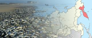 'Muerte masiva' de la vida marina frente a Kamchatka en Rusia