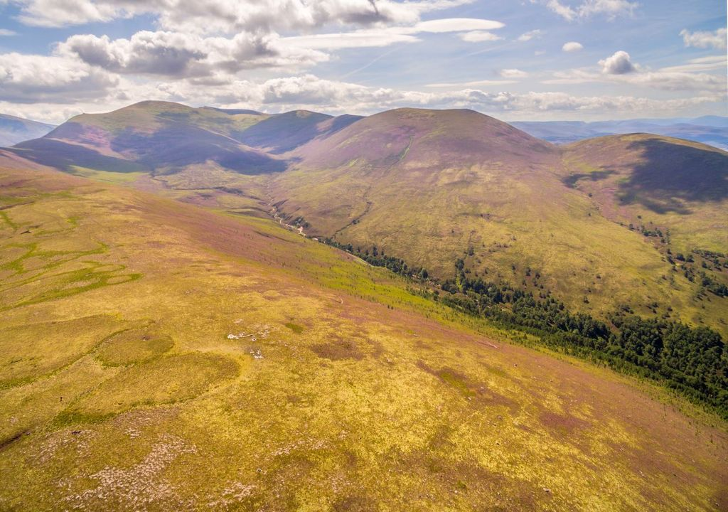 Regenerating woodland growing alongside Allt a' Mharcaidh in the mountains of Cairngorms National Park, Scotland © scotlandbigpicture.com