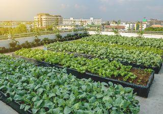 Naturación urbana: La irrupción de los techos verdes
