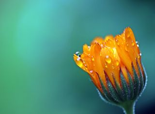 Negli ultimi due secoli estinte 571 specie vegetali