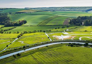 New woodlands to be created for UK riverbanks