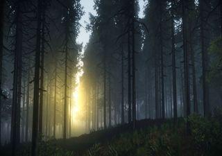 Noches más cálidas afectarán a la flora y fauna mundial