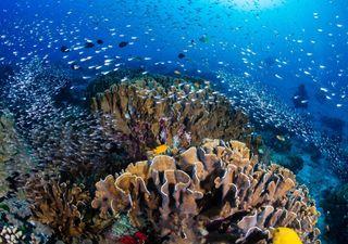 NOAA alerta para risco de mortandade de corais no litoral do Brasil