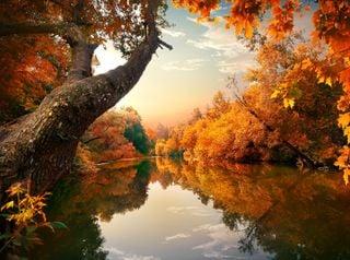 Cosas asombrosas que pasan en otoño y su explicación