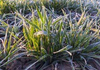 Falta de chuva, geadas e queimadas: o agro corre perigo neste inverno?