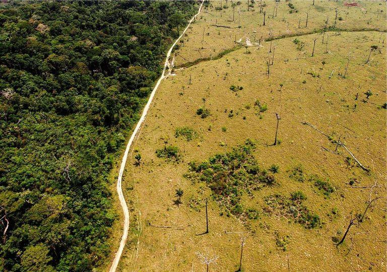 Desforestación; Amazonia;
