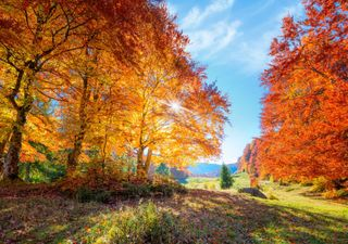 Die Wirkung der Sonne auf die Blätter