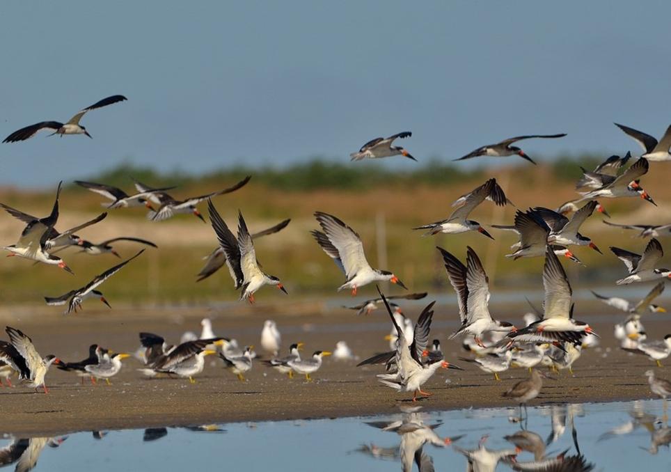 O impacto das alterações climáticas nas espécies migratórias