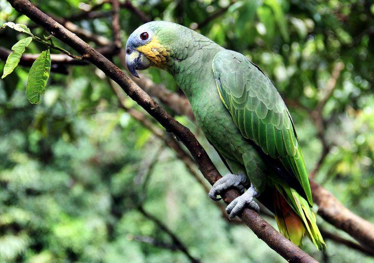 O que está causando a morte das árvores da Amazônia?