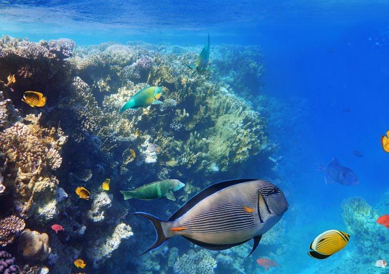oceano, mar, marino, clima, corales