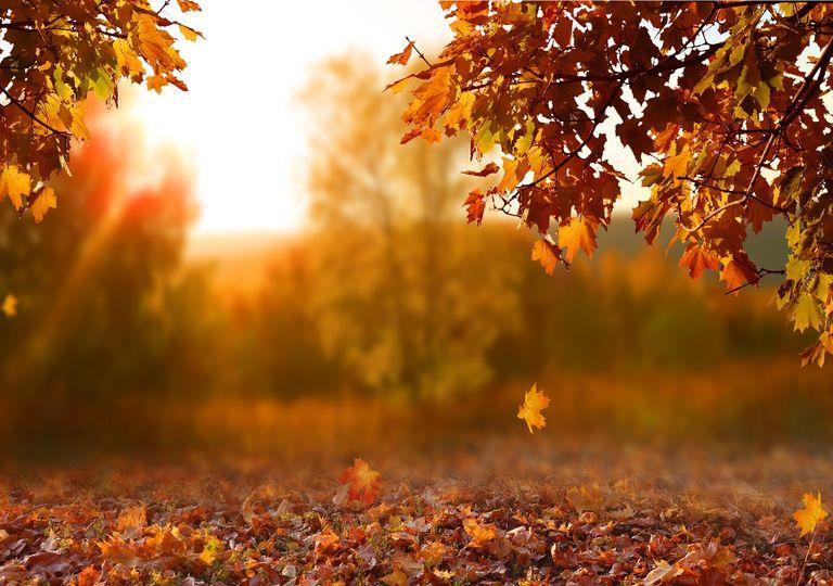 Árboles otoñales y hojas caídas