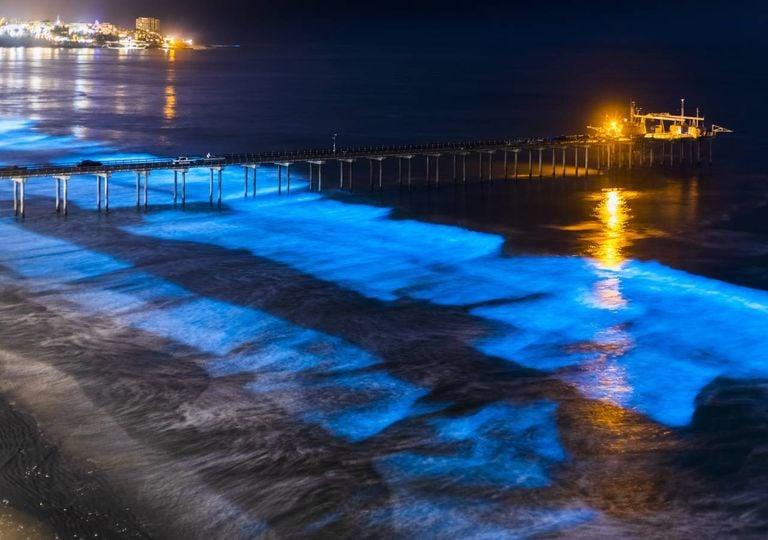 ondas bioluminescentes, mar azul fluorescente, bioluminescência